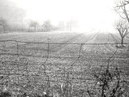 mattina presto a Valmontagnana